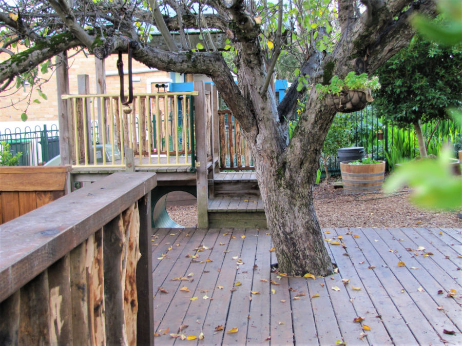 deck and tree